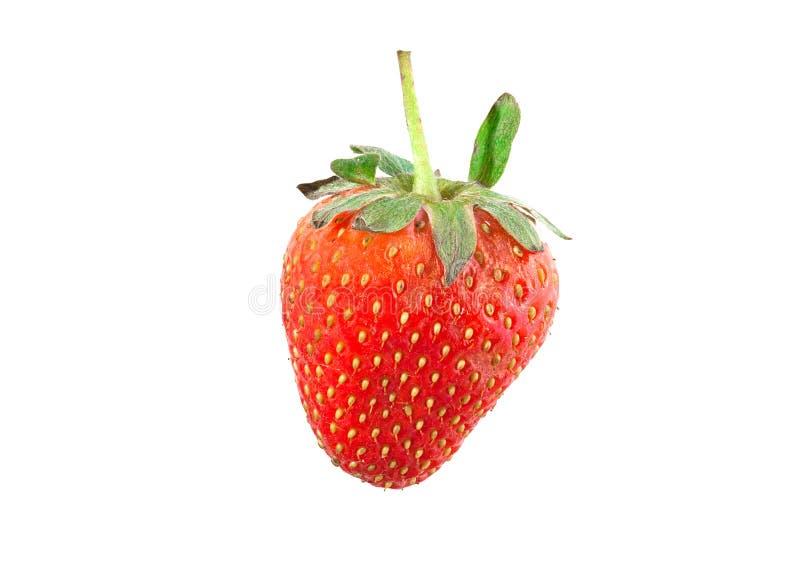 Download Fragola fotografia stock. Immagine di bacca, frutta, dolce - 55357618