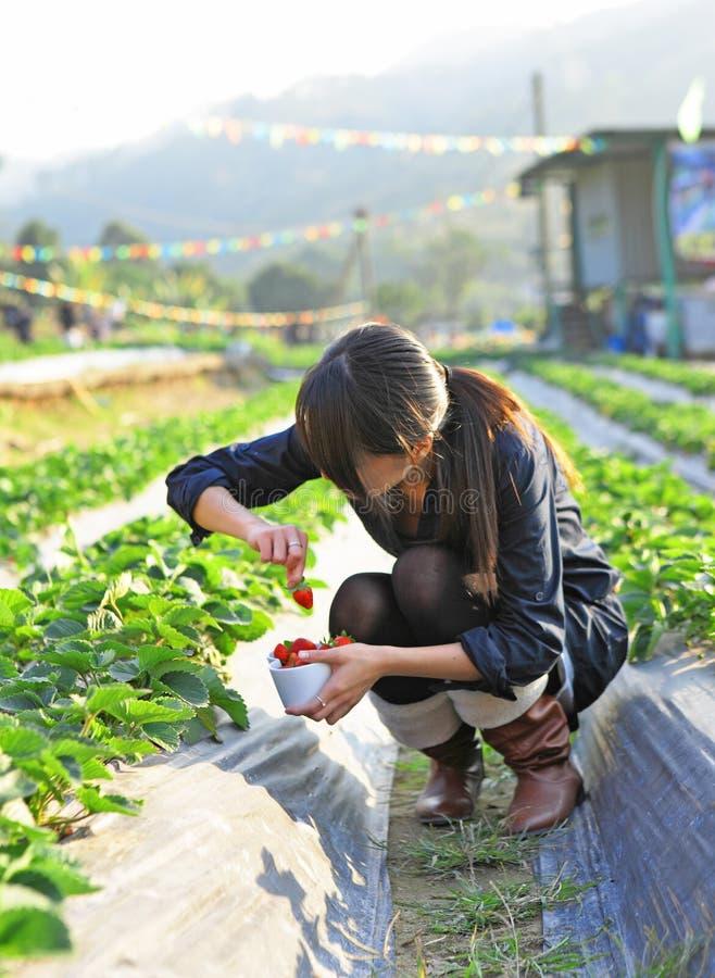 Fragola del selezionamento della ragazza in azienda agricola fotografia stock libera da diritti