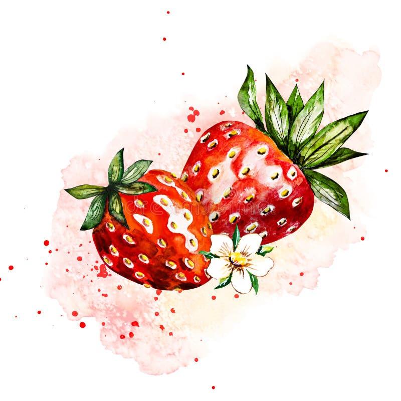 Fragola disegnata a mano della pittura dell'acquerello su fondo bianco illustrazione delle bacche royalty illustrazione gratis