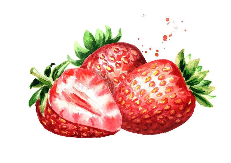Fragola matura rossa delle bacche Illustrazione disegnata a mano dell'acquerello isolata su fondo bianco royalty illustrazione gratis