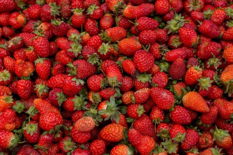 Fragola organica matura rossa fresca sul mercato degli agricoltori Fondo della bacca del primo piano Alimento sano del vegano immagine stock libera da diritti