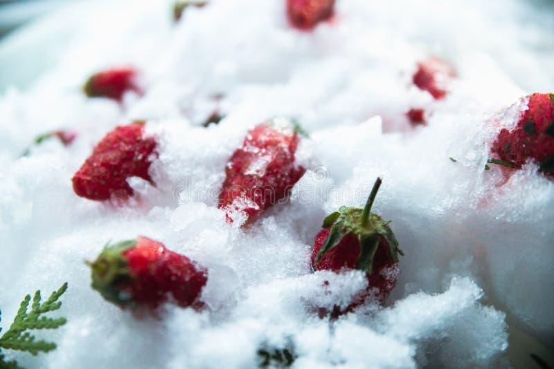 Fragole congelate nella neve e nel ghiaccio fotografia stock libera da diritti