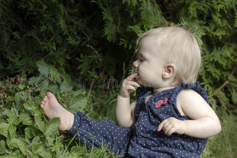 Fragole di bosco di raccolto immagini stock libere da diritti