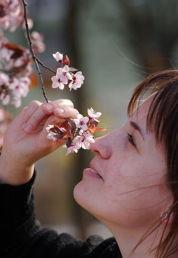 fragrance στοκ φωτογραφίες με δικαίωμα ελεύθερης χρήσης