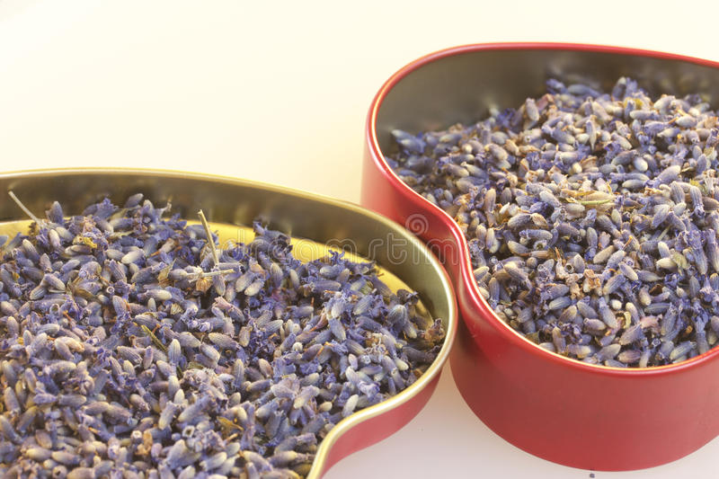 Fragrant lavender flowers, gathered in a metal box stock photography