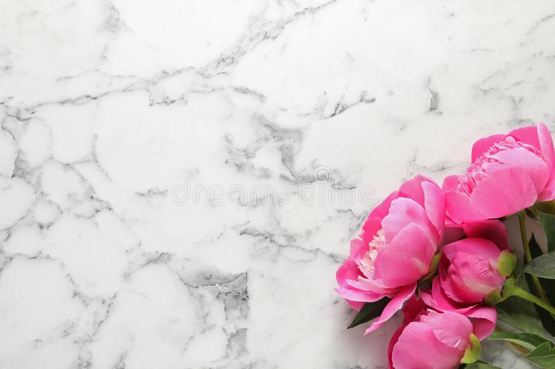 Fragrant peonies on marble background, flat lay. Beautiful spring flowers stock photos