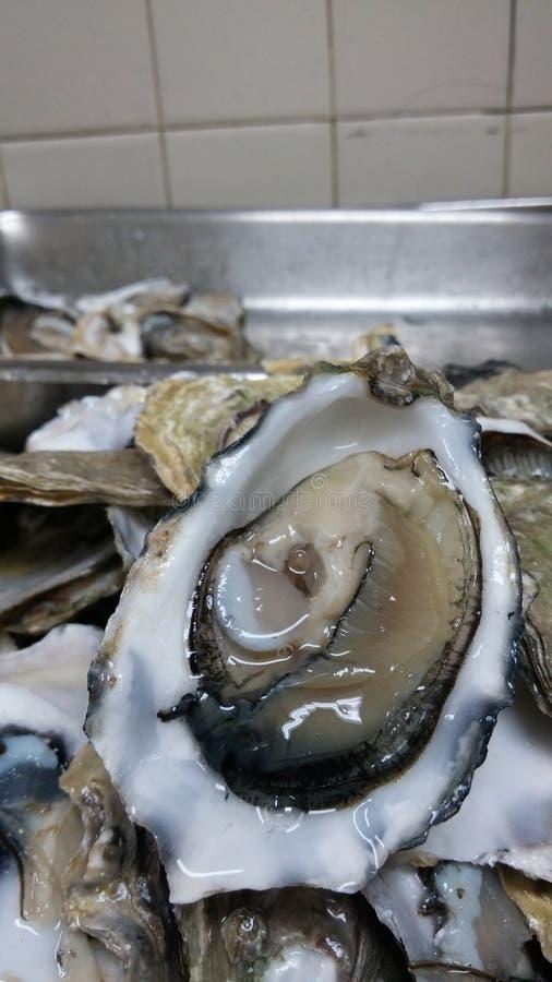 Frais écossé par huître image stock