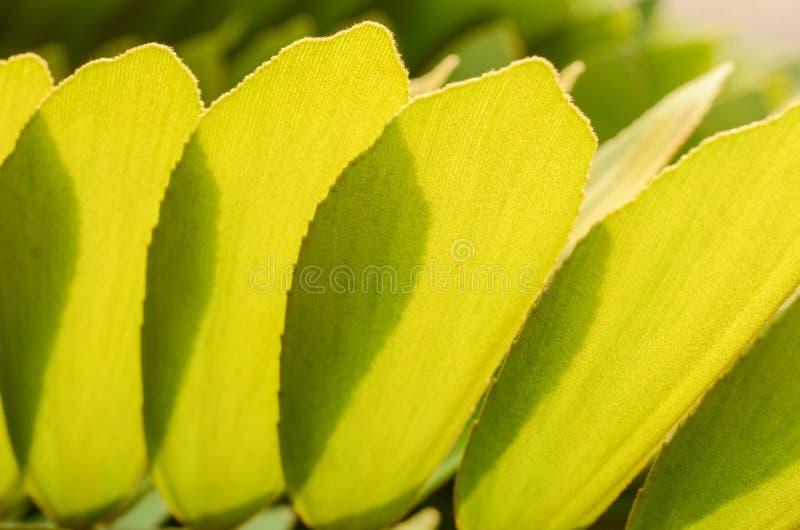 Frais des palmiers part avec la lumi?re de matin images libres de droits