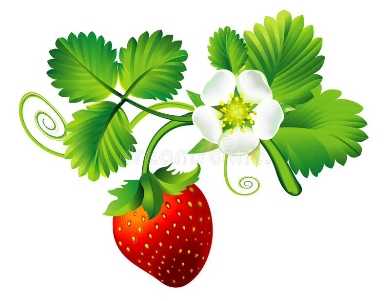 Fraise illustration libre de droits