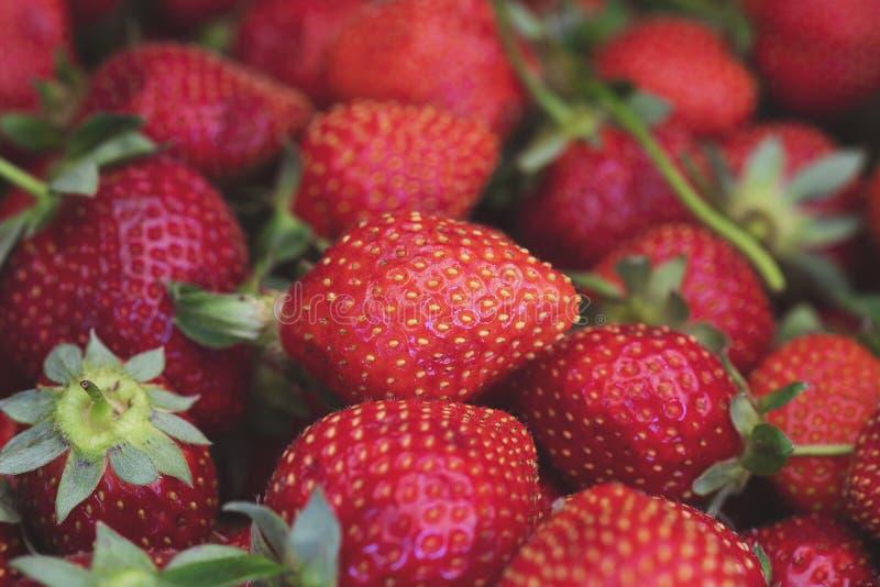Fraise Baies organiques fra?ches macro Fond de fruit photo libre de droits