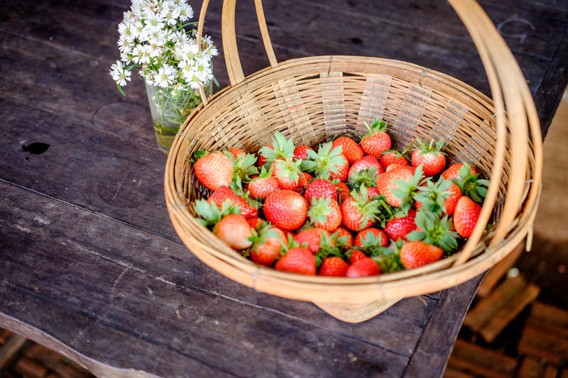 Fraise dans la ferme photo stock