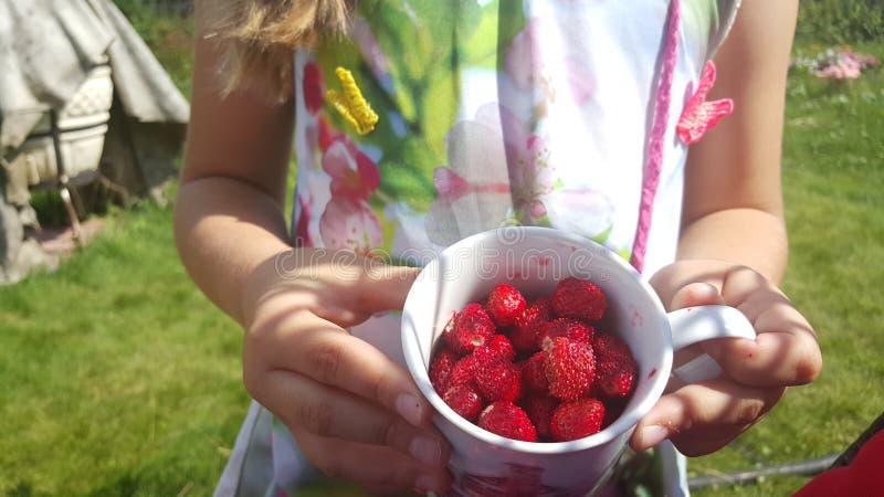 fraise dans une tasse photographie stock libre de droits