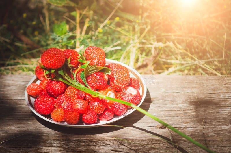 Fraise de jardin mûre Baie utile d'été, vitamines naturelles image stock