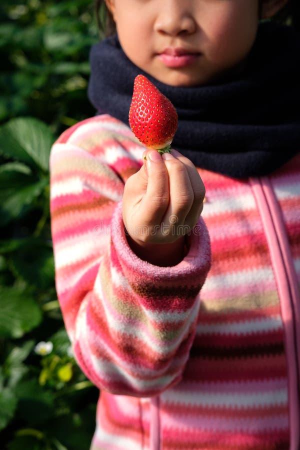Fraise japonaise fraîche en gros plan dans la main asiatique de fille d'enfant mignon à la ferme de cueillette de fraise au Japon photos libres de droits