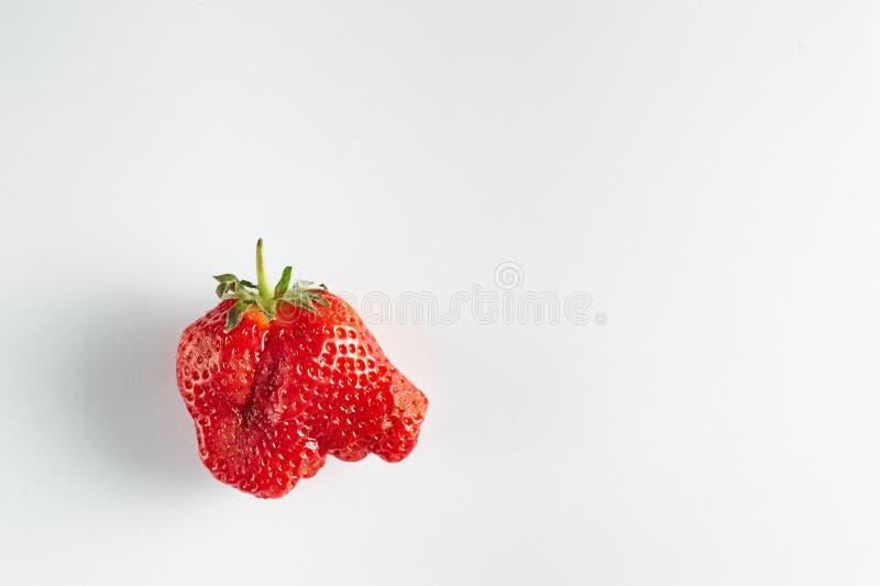 Fraise laide d'isolement au fond blanc La fraise étrange ressemble à la tête d'éléphant photographie stock