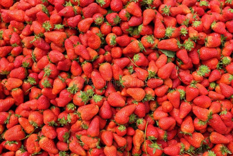 Fraise organique fraîche sur le fond Beaucoup de fraise photo libre de droits