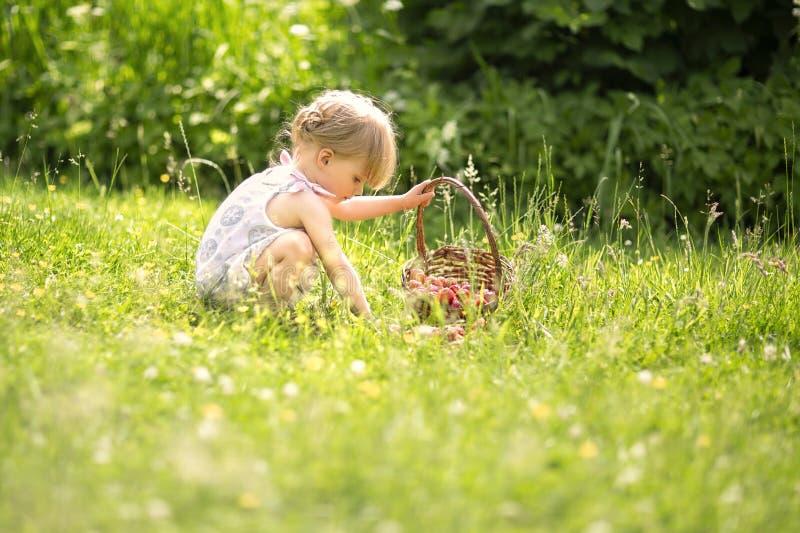 Fraises de cueillette de petite fille photographie stock