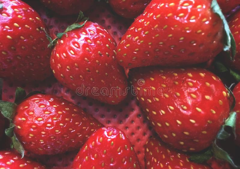 fraises, disposition de fruit dans un ordre flou, dans un conteneur avec un fond rouge photo libre de droits