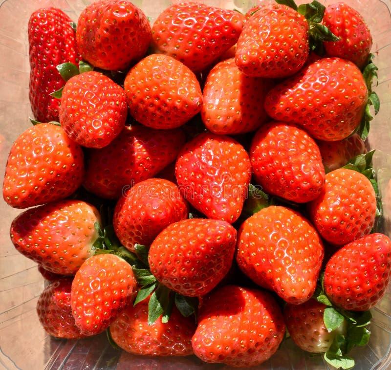 fraises rouges naturelles et fraîches sur un prêt à servir à manger image stock