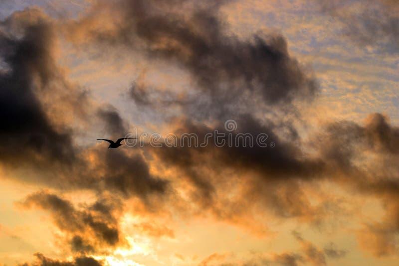 Frajer, seagull, niebo, chmura, zmierzch, komarnica, jesień, tło obrazy royalty free