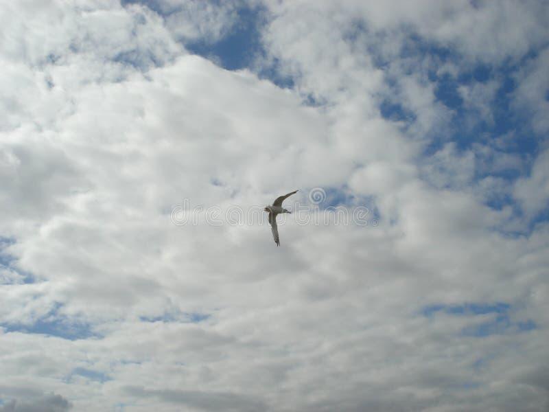 Frajer w niebie przeciw tłu chmury fotografia royalty free