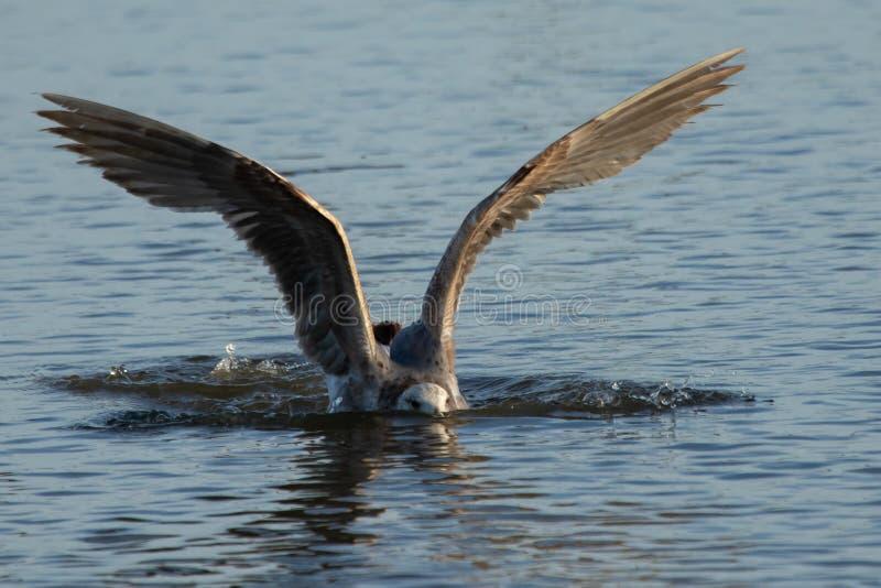 Frajera lądowanie w błękitne wody zdjęcie royalty free