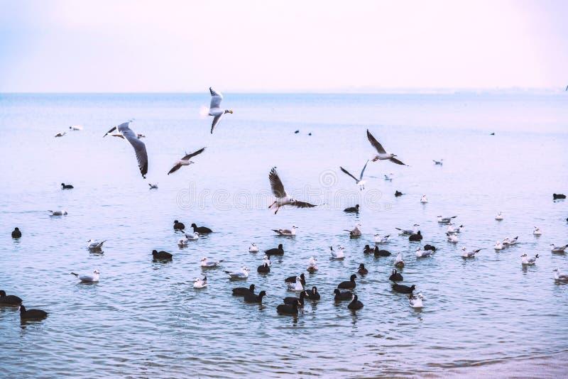 Frajery latają nad morzem Chmurząca pogoda nastrój lot ptaki obrazy royalty free
