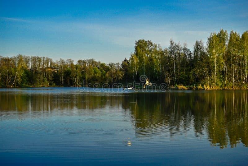 Frajery na jeziornym połowie obraz stock