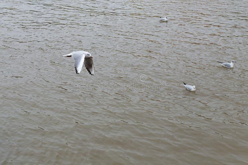 Frajery odpoczywają po tym jak tropiący dla spokojnej łaty woda na wiosna dniu zdjęcia royalty free