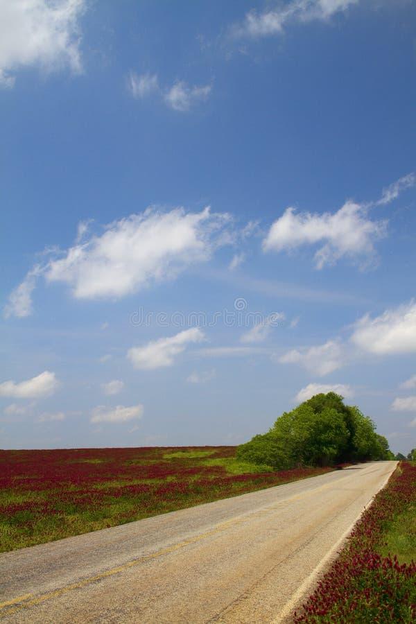 framåt fodrad röd väg arkivfoton
