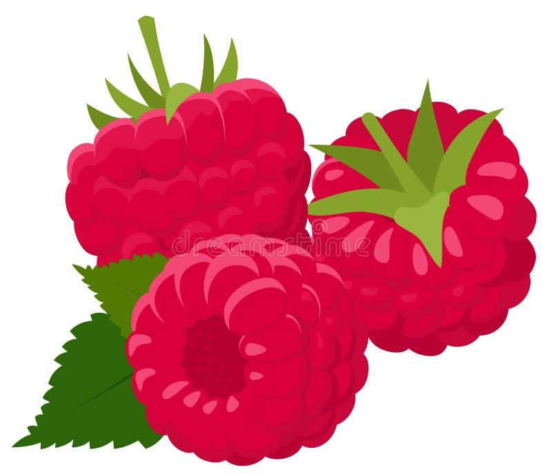 Framboesa isolada no fundo branco raspberries Baga da floresta Ilustração da quadriculação ilustração royalty free