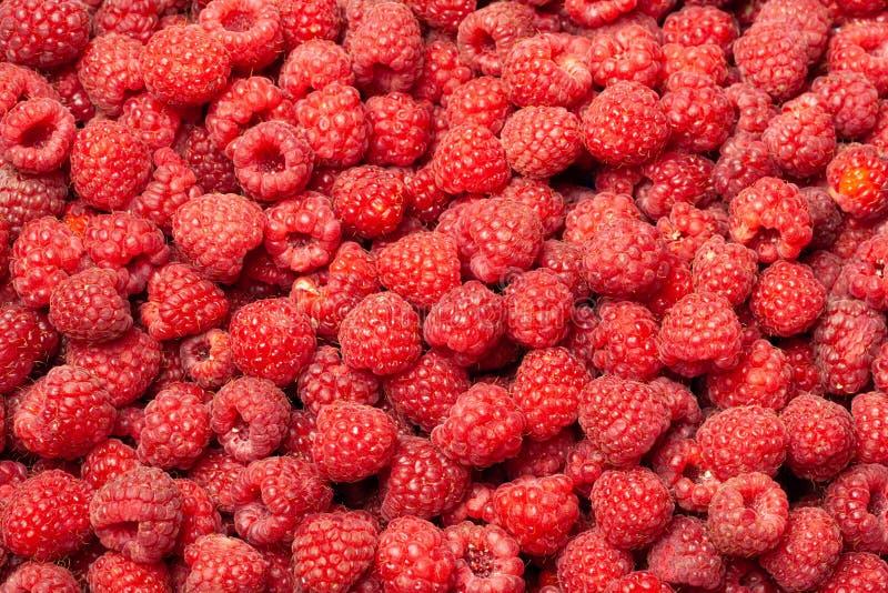 Framboesas maduras e frescas como um fundo fotografia de stock