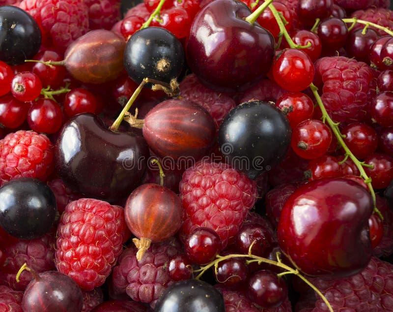 Framboesas maduras, groselhas, cerejas, corintos vermelhos e groselhas Bagas e frutos da mistura Vista superior fotos de stock
