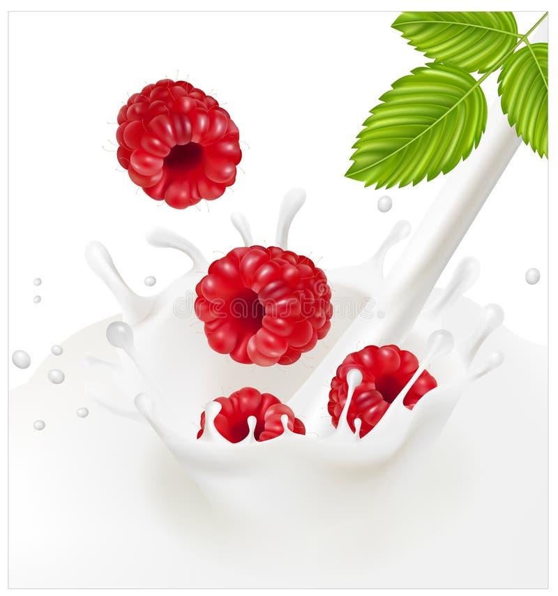 Framboesas vermelhas maduras que caem no respingo leitoso ilustração stock
