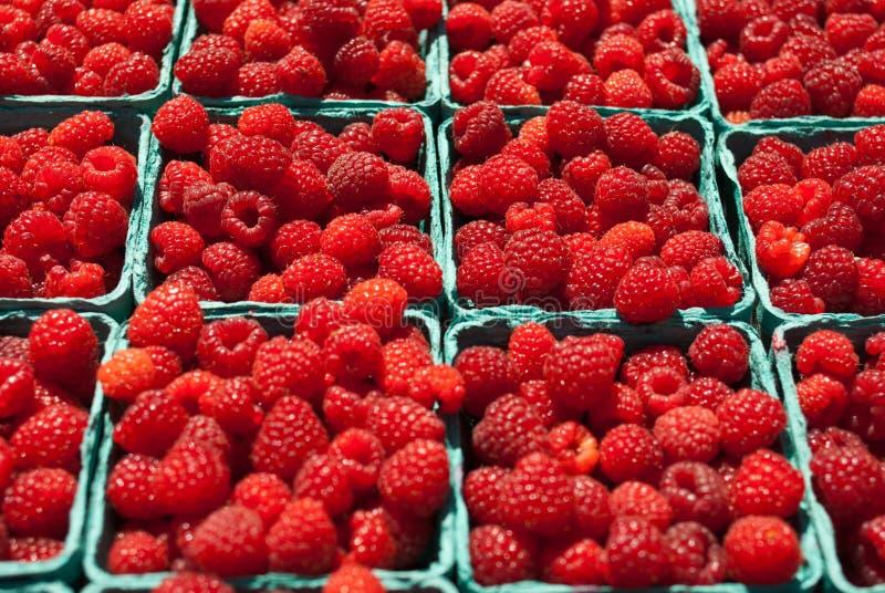 Framboesas vermelhas orgânicas fotografia de stock