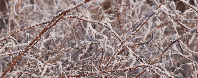 Framboise en hiver photos stock