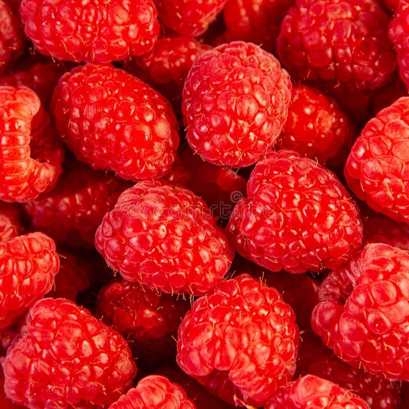 Framboise rouge fraîche délicieuse comme fond images stock