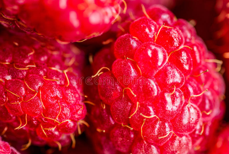 Framboises photographie stock