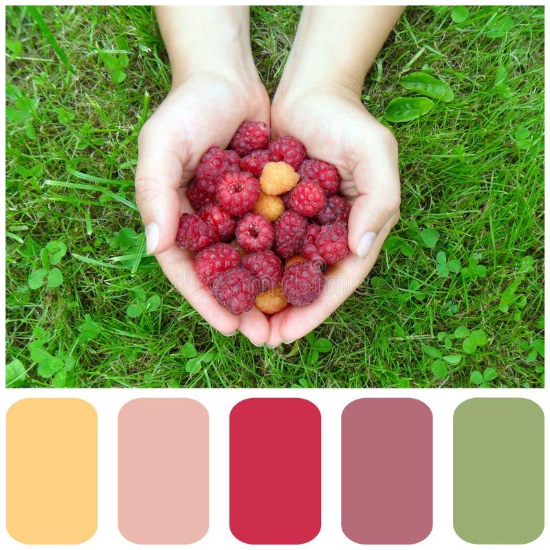 Framboises, palette de couleur avec l'échantillon de couleur photos stock