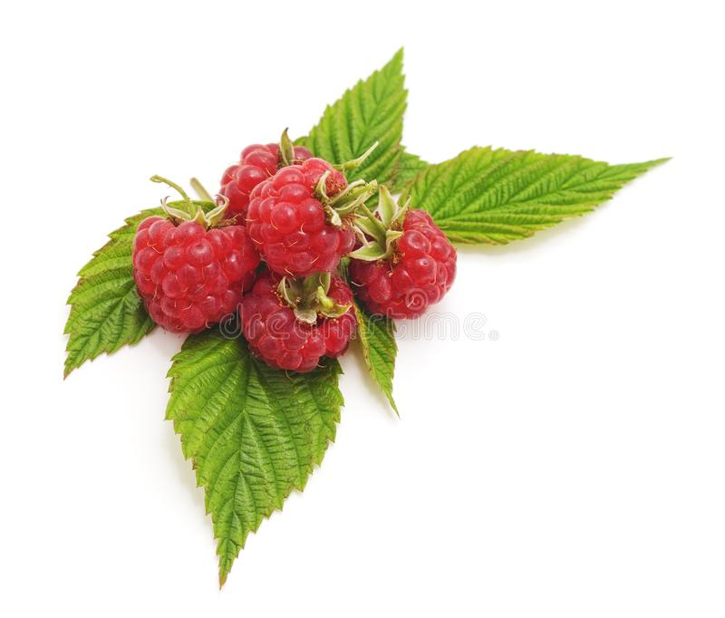 framboises rouges de baies images libres de droits