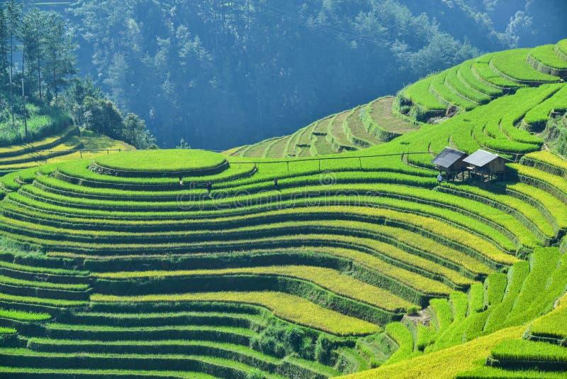 Frambozenheuvel en Terrasvormig padieveld van de etnische mensen van H ` Mong royalty-vrije stock foto
