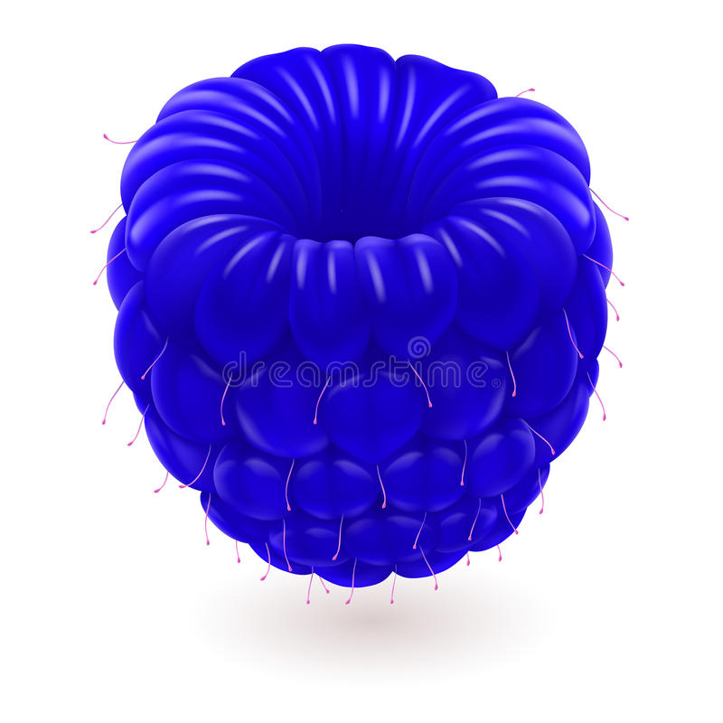 Frambuesa azul. libre illustration
