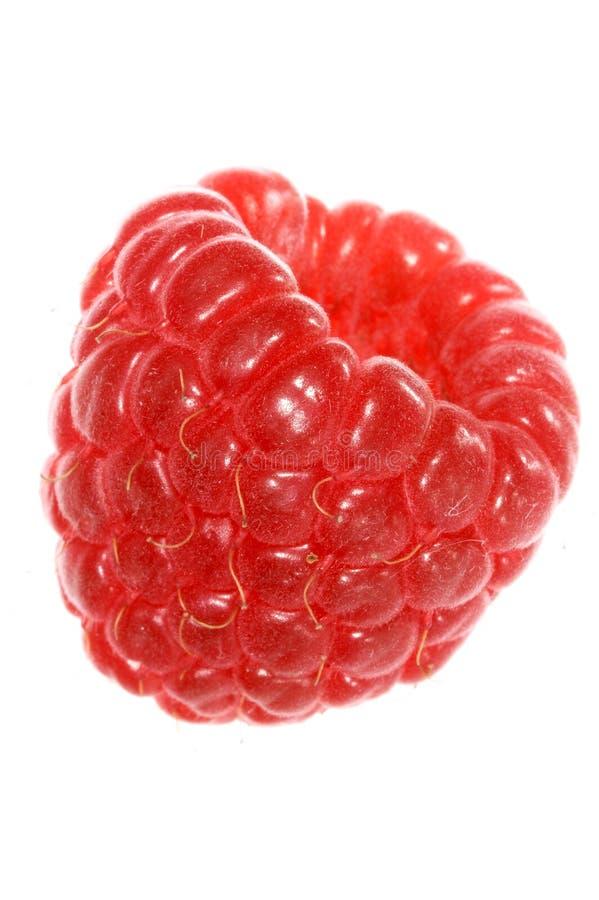 Frambuesa roja imagen de archivo