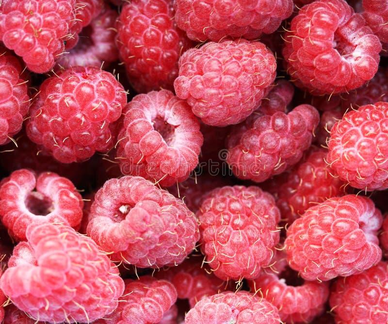 Frambuesa roja fresca. Fondo de la naturaleza fotografía de archivo