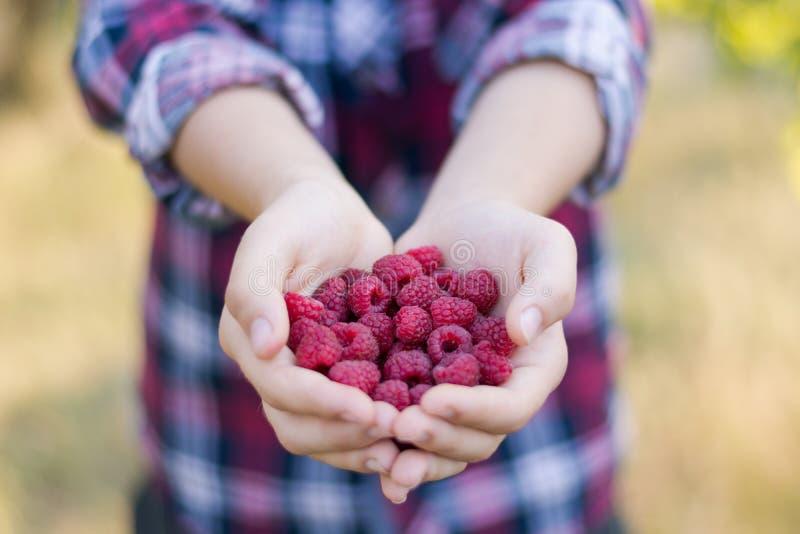 Frambuesas maduras frescas en las palmas de una muchacha fotos de archivo libres de regalías