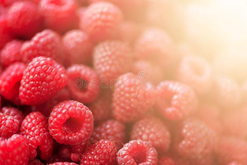 Frambuesas maduras macras Foco selectivo Fondo de la fruta con el espacio de la copia Verano y concepto soleados de la cosecha de foto de archivo