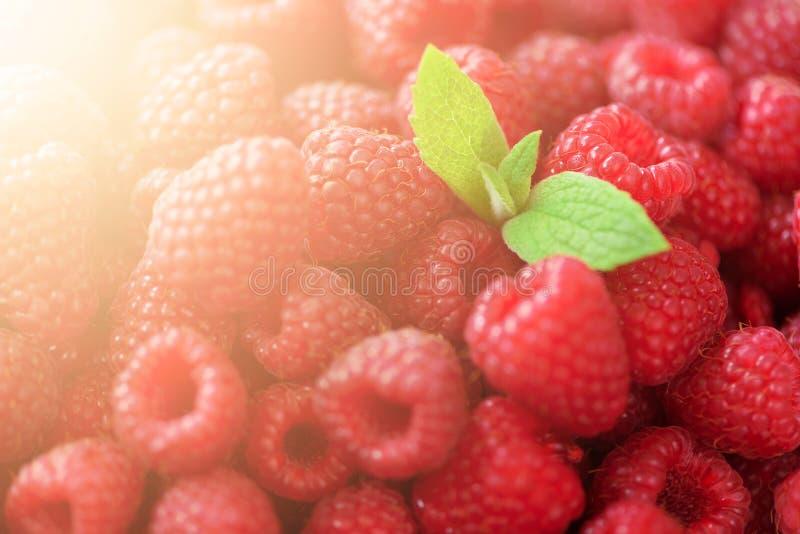 Frambuesas orgánicas frescas con las hojas de menta Fondo de la fruta con el espacio de la copia Verano y concepto de la cosecha  imágenes de archivo libres de regalías