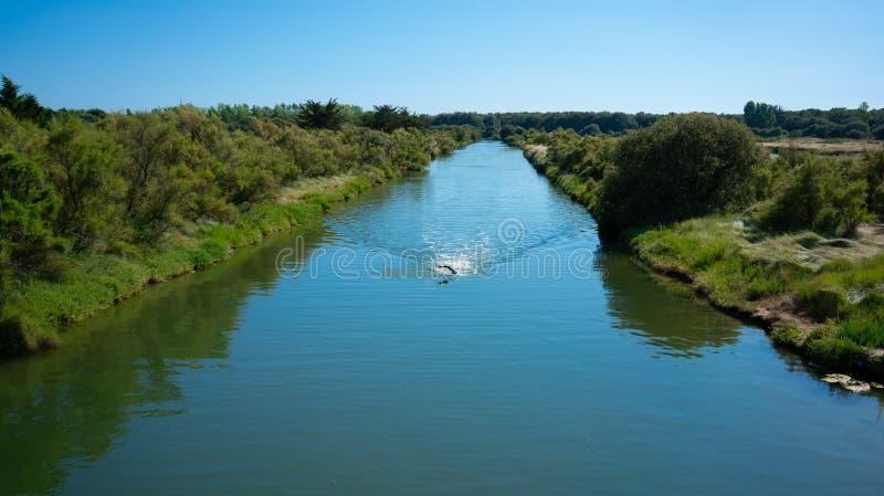 Framdel för simning för öppet vatten för man som kryper en flod i vendeen Frankrike fotografering för bildbyråer