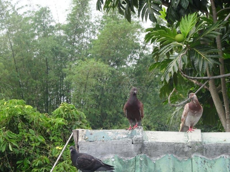 Framdel för två fåglar av lock arkivfoto