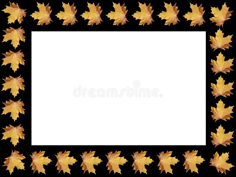 Download Frame stock illustration. Image of daisy, illustration - 11150639